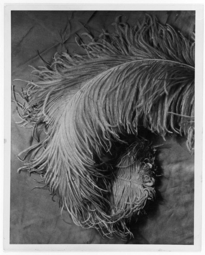 'Feather', Photography Class by Peterhans, Bauhaus Berlin, Photo: Horacio Coppola, 1932, Reproduction.
