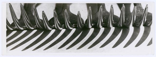 Forks, Photo: Elsa Thiemann, around 1930.